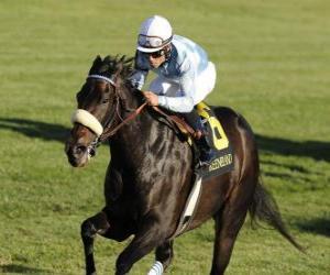 Puzle Kůň a žokej na dostihy na závodišti