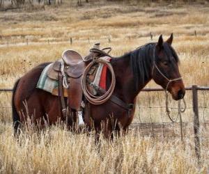 Puzle Kůň kovboje
