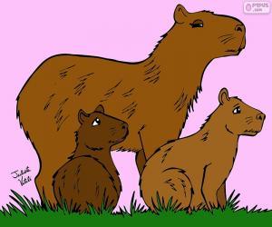 Puzle Kapybara, Julieta Vitalij
