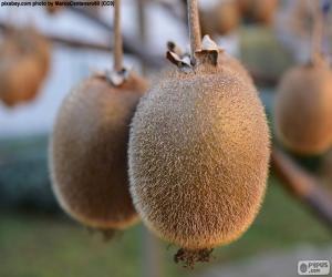 Puzle Kiwi v stromu