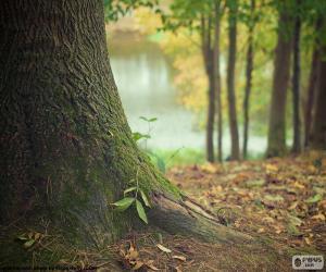 Puzle Kmen stromu