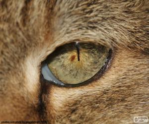 Puzle Kočičí oko