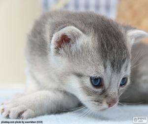 Puzle Kočka šedá modré oči