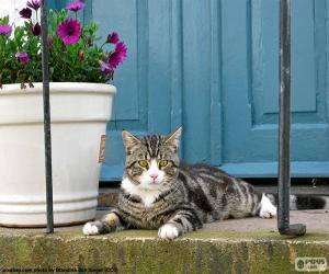 Puzle Kočka a květináč