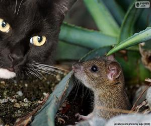 Puzle Kočka a myš