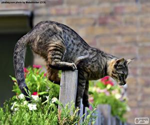 Puzle Kočka na plotě