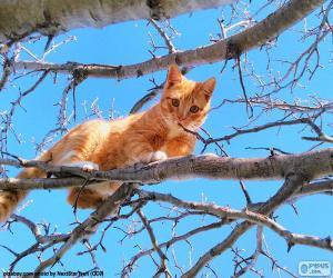 Puzle Kočka na větvi