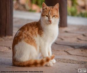 Puzle Kočka sedící