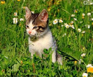 Puzle Kočka v poli