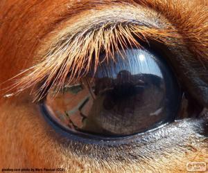 Puzle Koňské oko