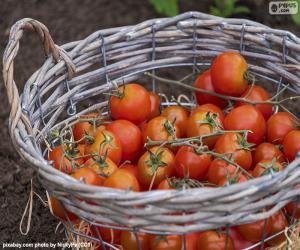 Puzle Koš rajčat