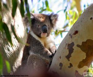 Puzle Koala na stromě