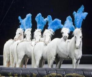 Puzle Koně, které jednají v cirkuse
