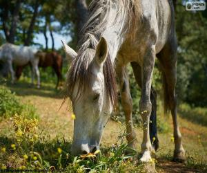 Puzle Koně pasoucí se