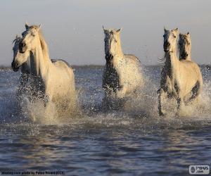 Puzle Koně ve vodě