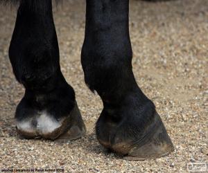 Puzle Kopyta koně