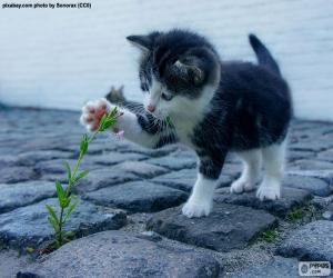 Puzle Kotě a rostlin