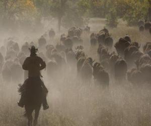 Puzle Kovboj vede plemennou
