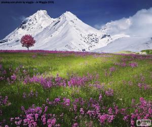 Puzle Krásná scenérie Alp
