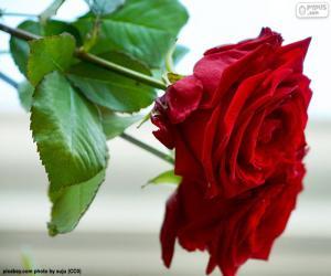 Puzle Krásné růže