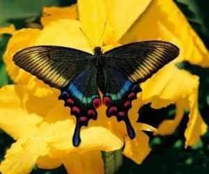 Puzle Krásný motýl na žlutý květ