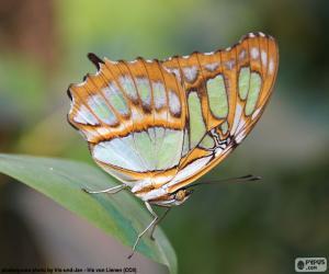 Puzle Krásný motýl