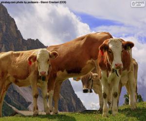 Puzle Krávy