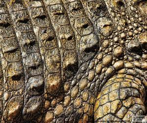 Puzle Krokodýlí kůže