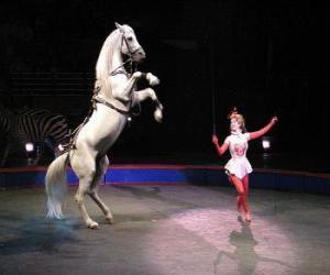Puzle Krotitel koní