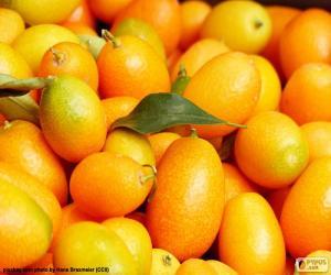 Puzle Kumquat