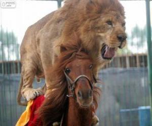 Puzle Lev a kůň dělá jejich výkonnost cirkus