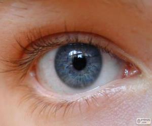 Puzle Lidské oko