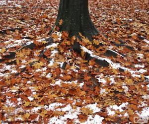 Puzle Listí a sněhu