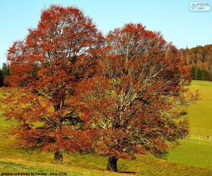 Puzle Listnaté stromy