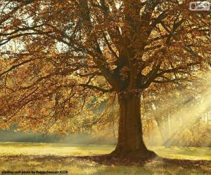 Puzle Listnatý strom na podzim