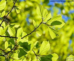 Puzle Listy stromů