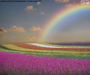 Puzle Louka plná květin