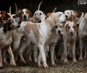 Puzle Lovečtí psi