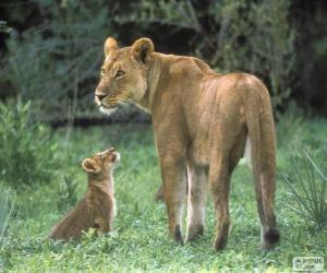 Puzle Lvice s její mládě