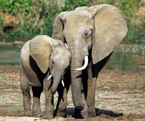 Puzle Máma ovládání malý slon s pomocí jejího chobot