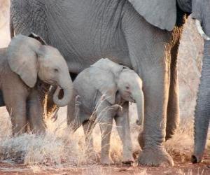 Puzle Máma ovládání malý slon