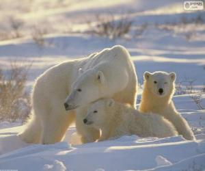 Puzle Mámo medvědice s mláďata