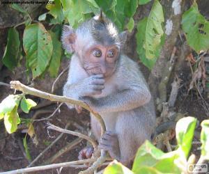 Puzle Malá opice