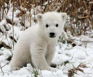 Puzle Malý medvěd