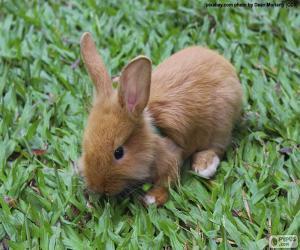 Puzle Malý zajíček