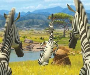 Puzle Marty komunikaci s dalšími zebry