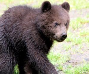 Puzle Medvídě, baby medvěd
