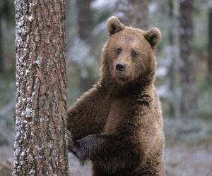 Puzle Medvěd hnědý v nohou opřenou o strom