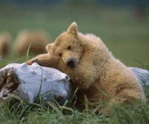 Puzle Medvěd na kufr