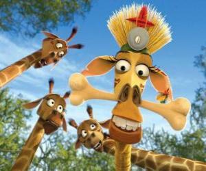 Puzle Melman žirafa, skrytá pod zvědavé oči ostatních žiraf